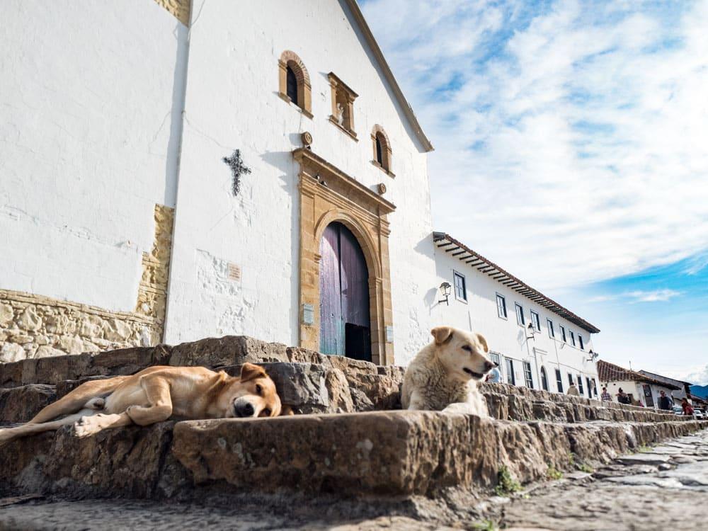 chiens devant l'église de villa de leyva voyage en Colombie