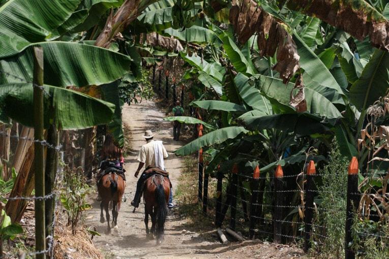 acitivités à salento balade à cheval blog de voyage en colombie