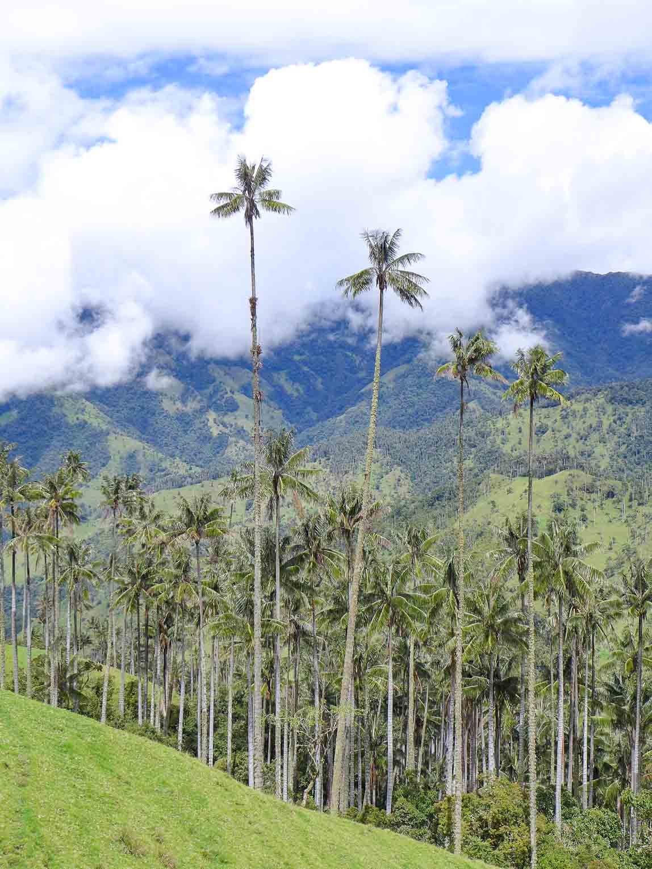 Valle Tochecito de la Carbonera en Salento Colombia