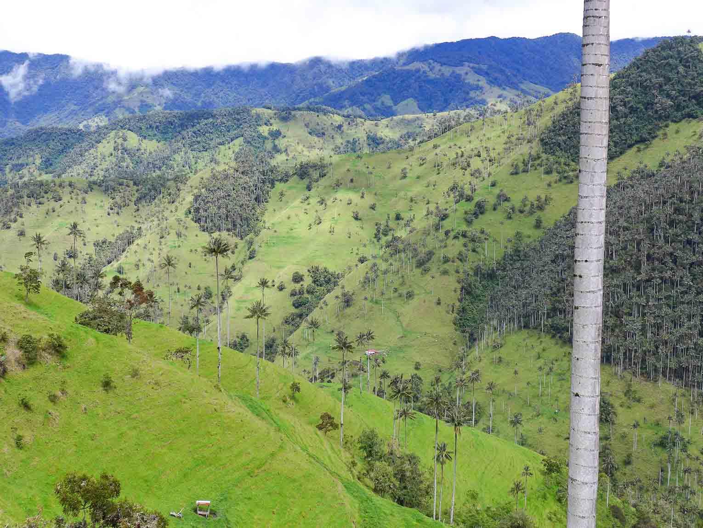 Tochecito vallée de la Carbonera à Salento en Colombie