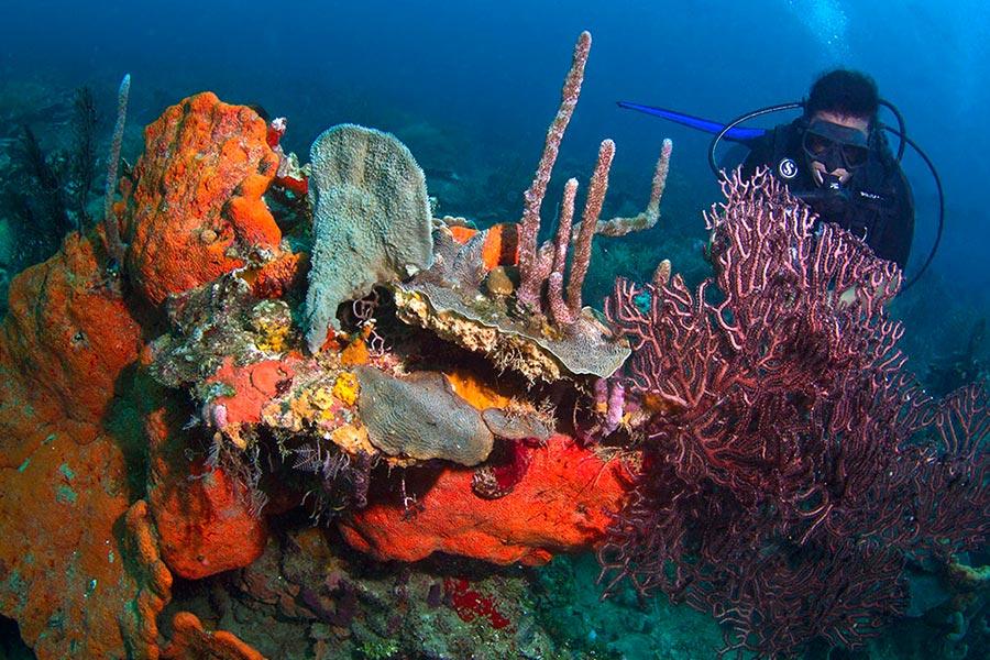 Plongée sous marine au parc naturel Islas del Rosario à Cartagena en Colombie