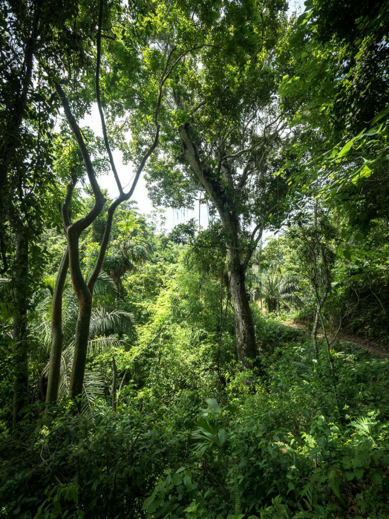 Dans la forêt de la Sierra Nevada de Santa Marta