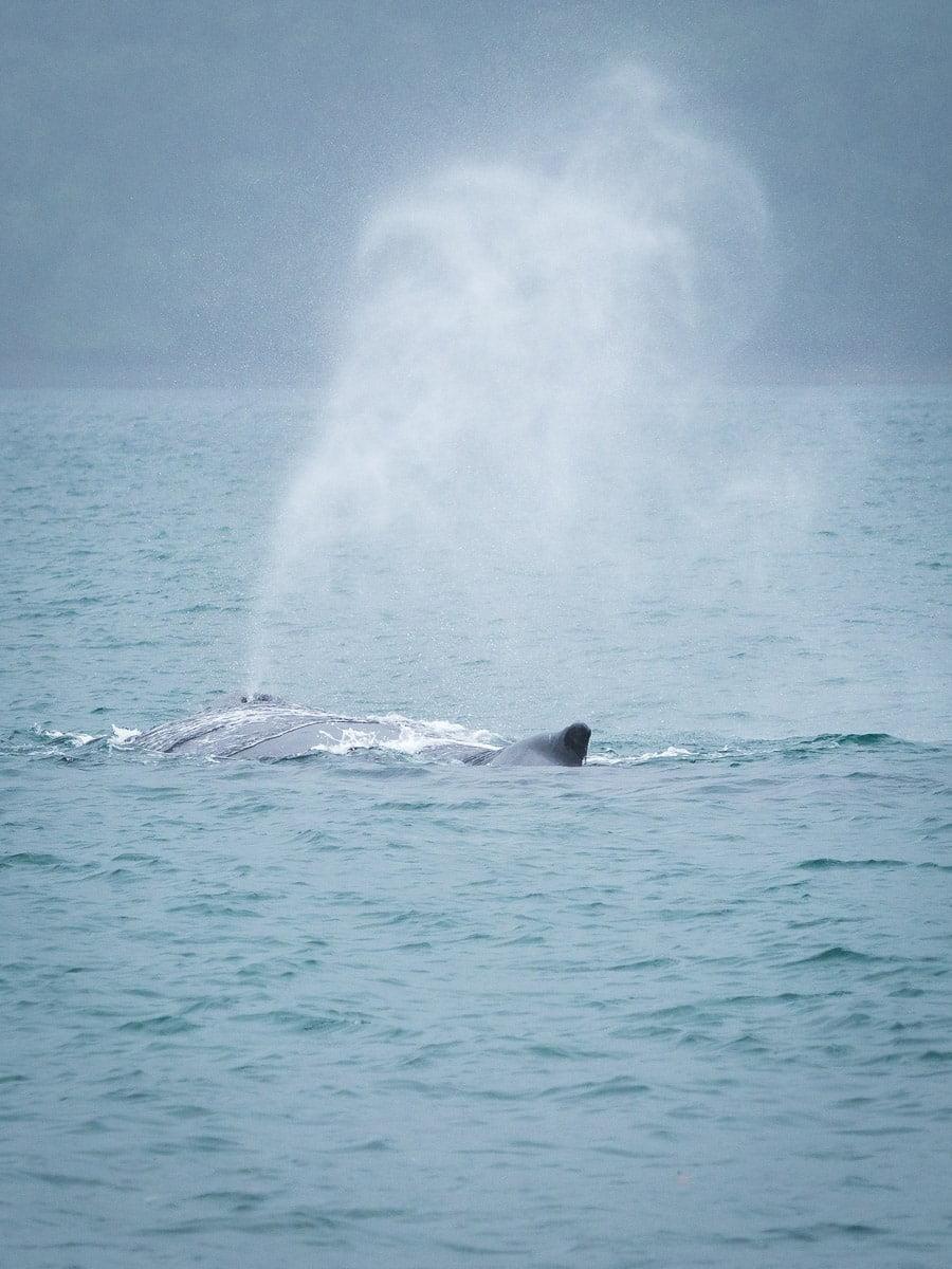 observation des baleines à playa blanca parc utria pacifique colombie