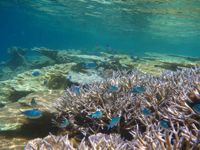Plongée sous-marine à Islas del Rosario, Cartagena en Colombie