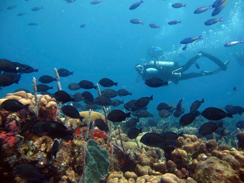 Plongée sous-marine à Cartagena Islas del Rosario en Colombie
