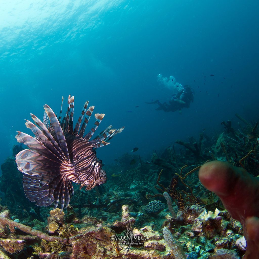 Plongée sous-marine à Islas del Rosario, Carthagène en Colombie