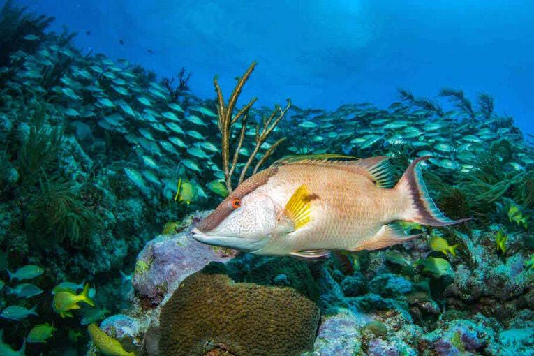 plongée sous-marine en Colombie