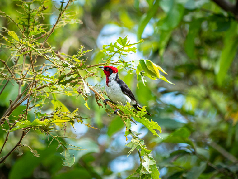 faune et animaux sauvages dans la région du Casanare, Llanos en Colombie