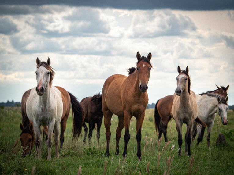 Chevaux, faune et animaux sauvages dans la région du Casanare, Llanos en Colombie